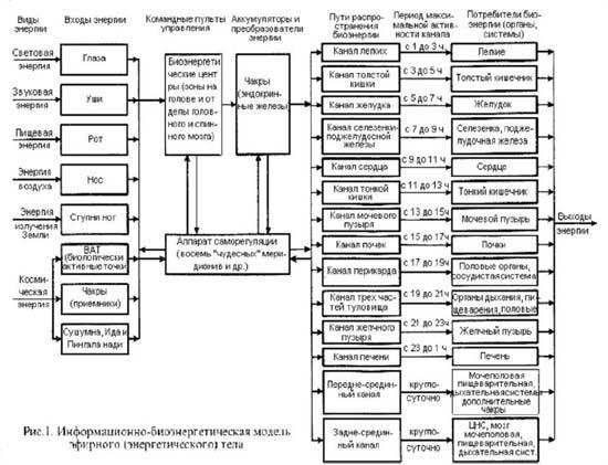 Схема взаимосвязей чакр, меридианов и внутренних органов