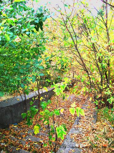 Осенние ступени