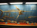 США: Национальный музей естественной истории в Вашингтоне