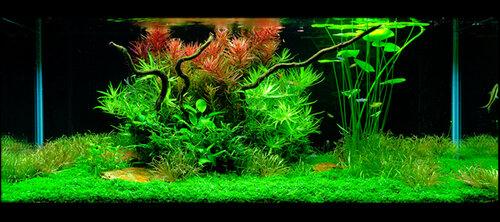 Стиль Дзен Сад (Zen Garden).  Вдохновение в создании такого аквариума естественно черпается у бонсай и китайских садов камней.