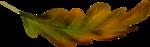 осенние тропинки (70)