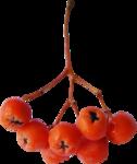 осенние тропинки (73)