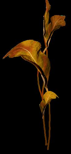 осенние тропинки (42)
