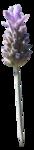 Secret Garden Flower12.png
