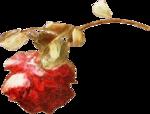 ldavi-heartwindow-rose5.png