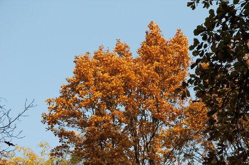 Настроение: осень