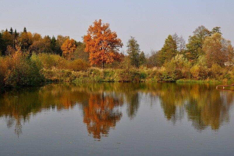 Дуб осень 5