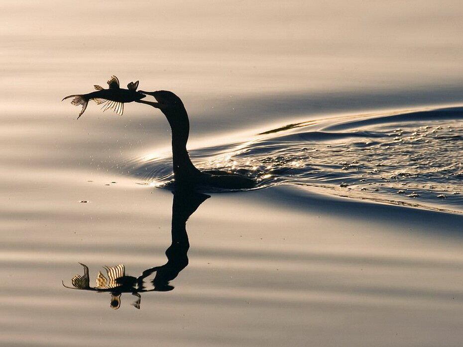 Большое фотопутешествие с National Geographic