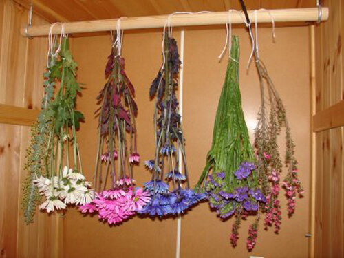 Можно ли хранить сухие цветы дома