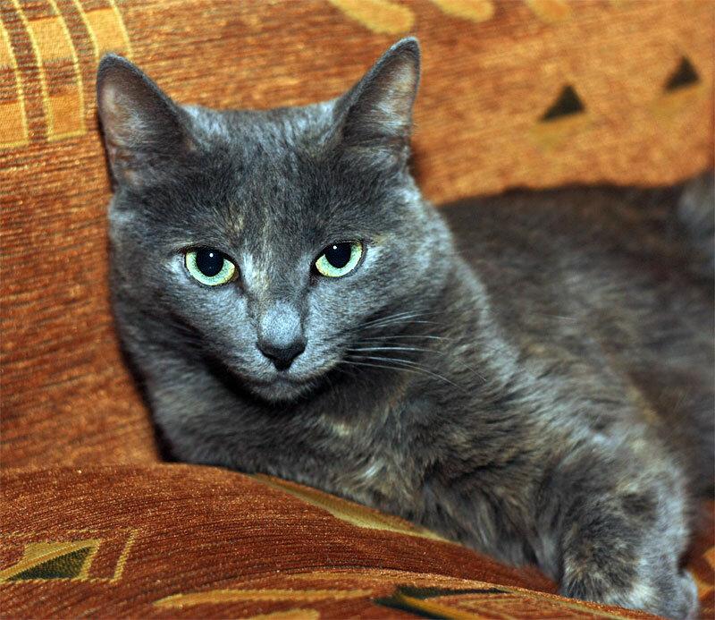 Тинки, октябрь 2011