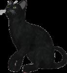 rs_blackcat3.png