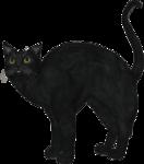 rs_blackcat8.png