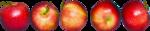 осенний мед (102)