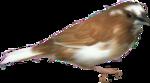 осенние тропинки (67)