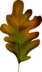 осенние тропинки (69)
