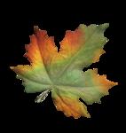 волшебная осень (108)