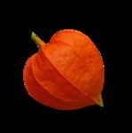 волшебная осень (144)