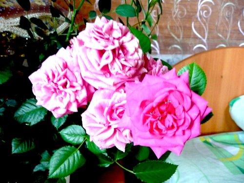 На одном стебле пять цветов