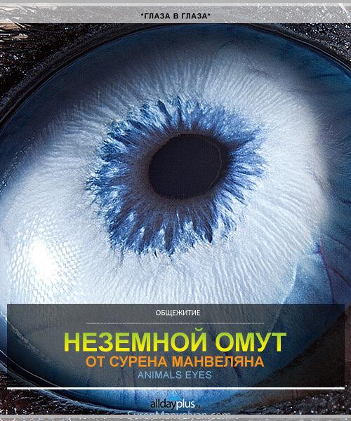Animals eyes - омут глаз животных от Сурена Манвеляна
