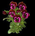 цветы (59).png