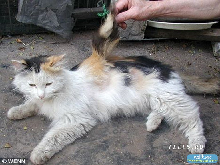 spray to keep cats from chewing cords