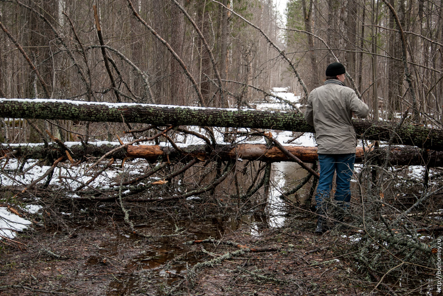 деревья упали на дорогу