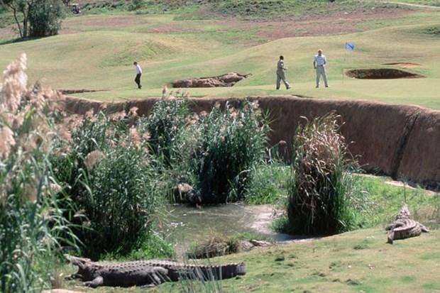 Как в Южной Африке сбежали 15 тысяч крокодилов
