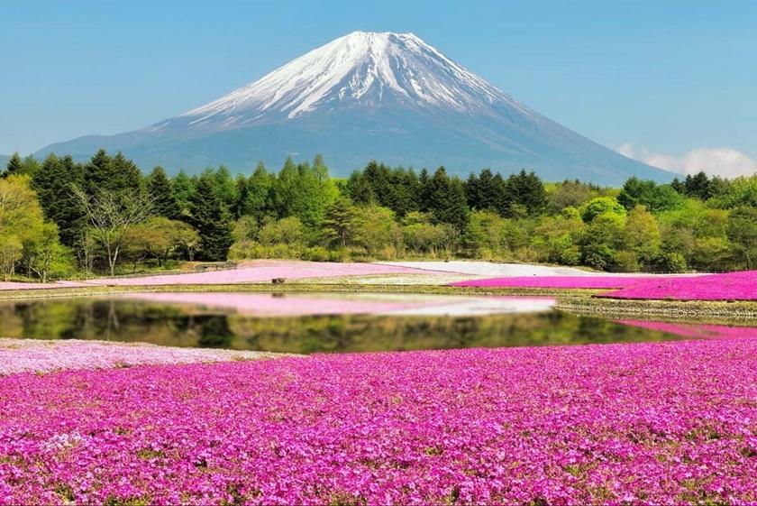 Цветущий розовым японский парк Хицудзияма. Фотографии 0 141ad8 abe634eb orig