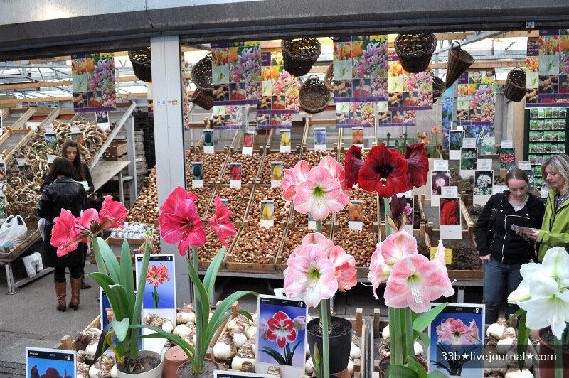Цветов букете, оптовые рынки цветов адреса