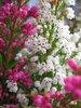 Цветики. Комнатные и не только