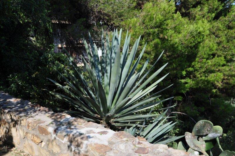Кактусы на Хибралфаро
