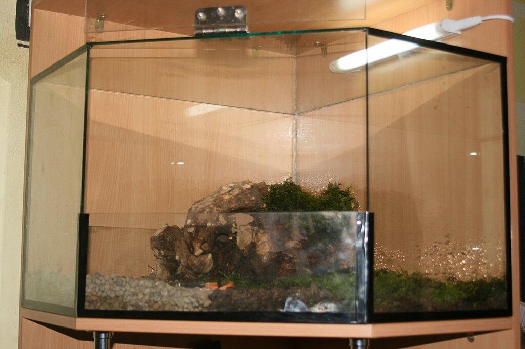 Ахатины какой аквариум