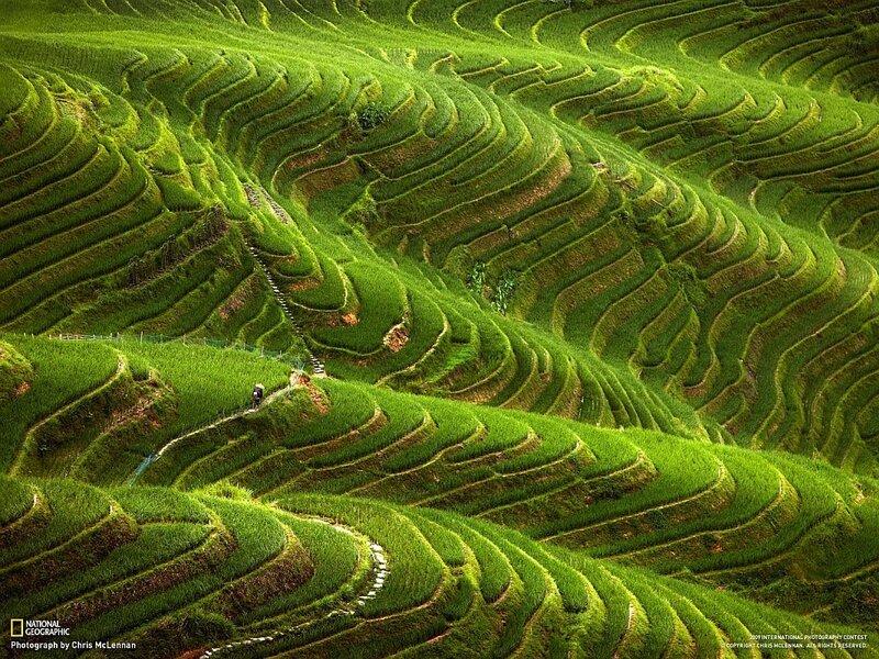 террасы риса в Южном Китае