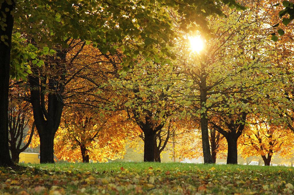 свет октября