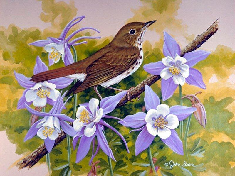 Райские цветы картинки 4