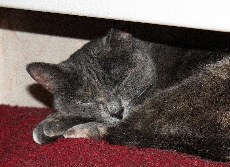 Тинки, 24 октября, спит на батарее