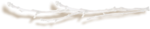 kimla_CAAB_branch1_sh.png