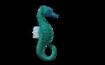 морской конек (1).png
