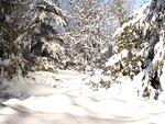 R11 - Winter Time - Back 019.jpg