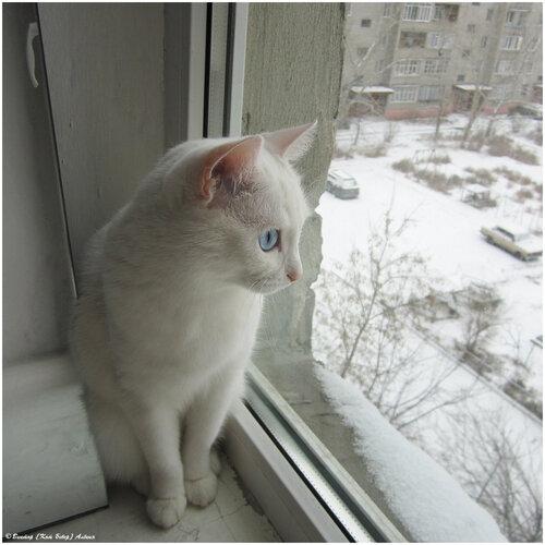 Снег идёт, снег идёт...