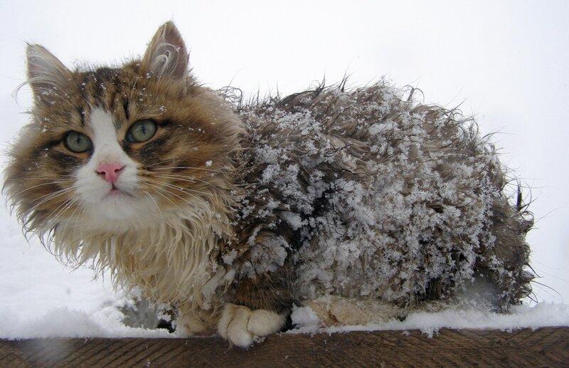 Картинки прикольные про снег с добрым утром, картинки днем