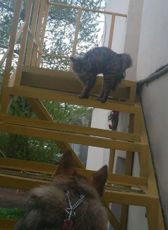 Канис и кошка.jpg