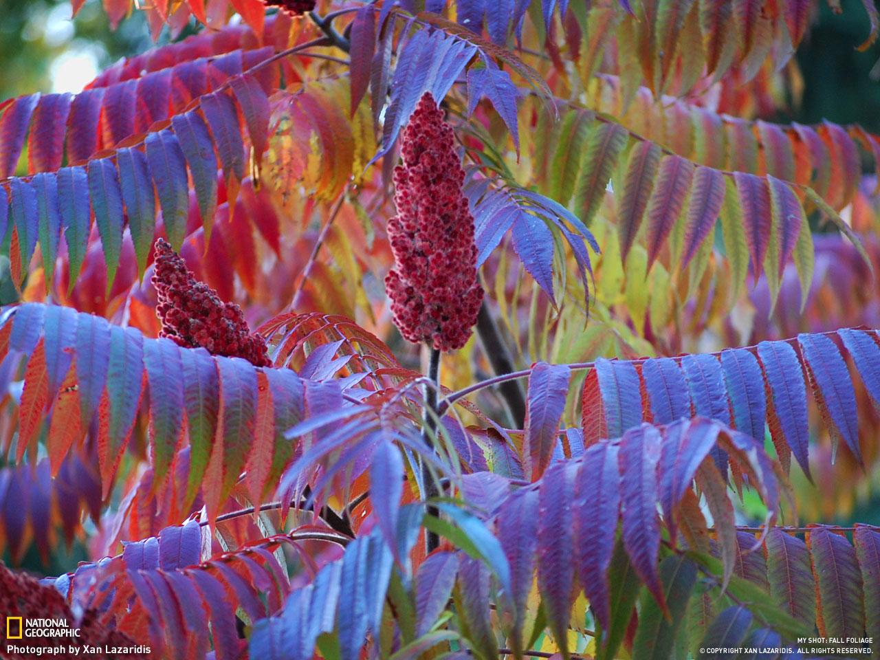 Осень от National Geographic