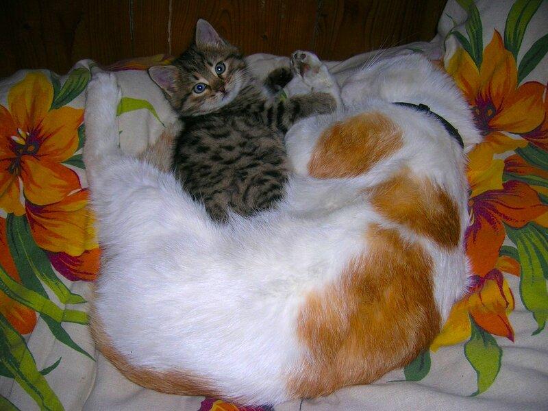 Фото. домашние кошки. Lybow4873. вывесила фотку. Пушистики на отдыхе