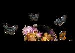 Butterflies8_31_KL.png