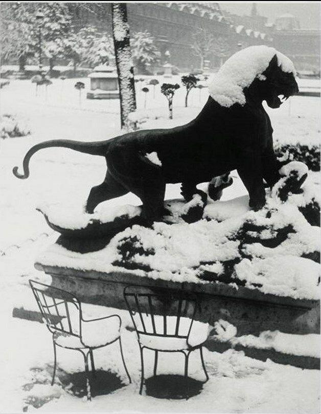 1947. Лев в саду Тюильри