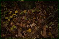 http://img-fotki.yandex.ru/get/4419/15842935.1f4/0_d9efd_febfdd48_orig.png