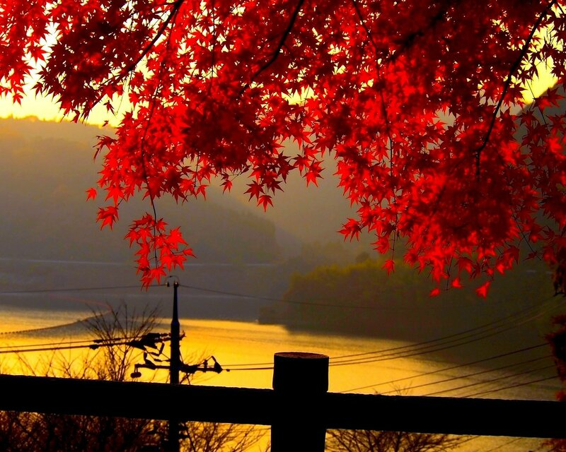 River-Red-leaves-Sunset-2048x2560.jpg