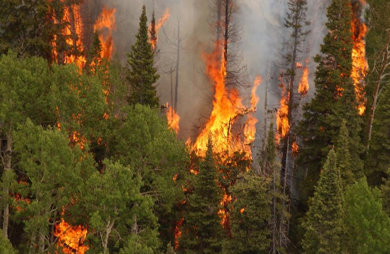 31. Гленвуд, штат Колорадо недалеко от города Гленвуд Спрингс. Пожар 15 июня 2002 года. Andrea Boohe