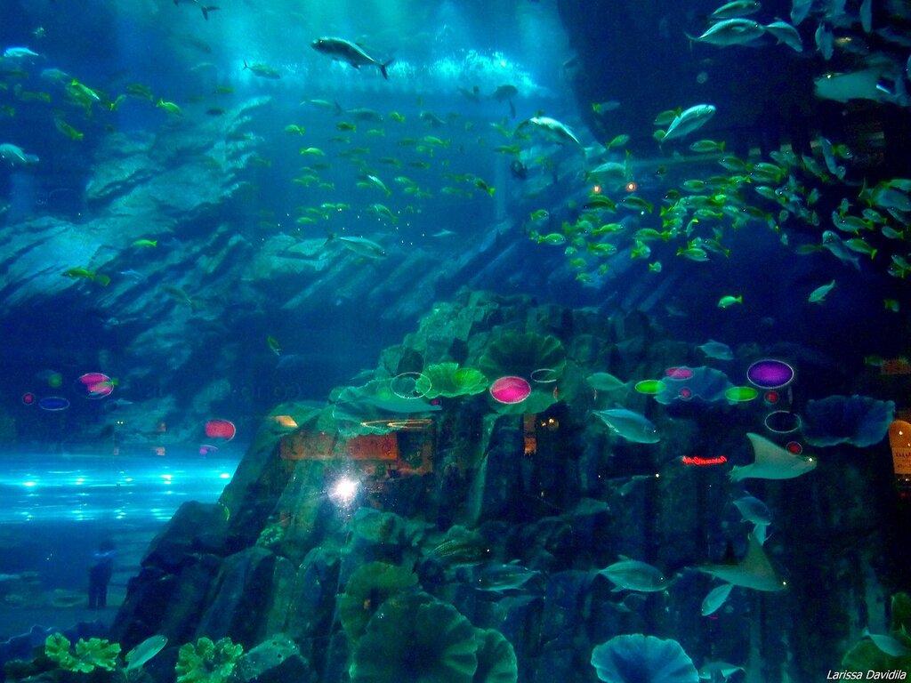 Торговый центр Dubai Mall -аквариум.